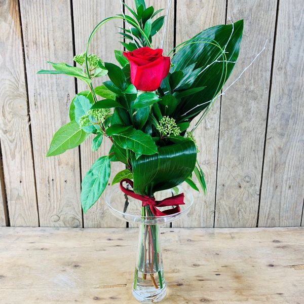 Rosa Roja Pasión
